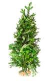 Kleiner Baum Weihnachtsbaum auf einem Stand Stockfotos