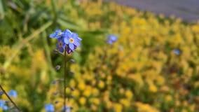 Kleiner blauer Blumen-Hintergrund Stockfotografie