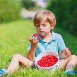 Kleiner blonder Junge glücklich über seine Ernte auf Himbeerbauernhof Stockfotos