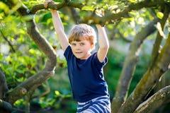 Kleiner blonder Kinderjunge von 5 Jahren, die im Baum im Sommer klettern Lizenzfreies Stockfoto