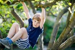 Kleiner blonder Kinderjunge von 5 Jahren, die im Baum im Sommer klettern Stockfotos