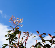 Kleiner Blumenfrühling von der Hecke stockbilder