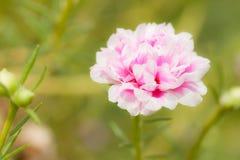 Kleiner Blumengarten in schönem Lizenzfreies Stockbild
