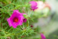 Kleiner Blumengarten in schönem Lizenzfreies Stockfoto