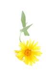 Kleiner Blumenstrauß Stockfotografie