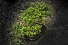 Kleiner Bonsaibaum in der Ausstellung Lizenzfreie Stockfotografie