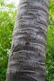 Kleiner brauner grauer Gecko, der auf Baumstamm sitzt lizenzfreie stockfotografie