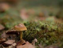 Kleiner bunter Pilz auf einem Baum und Gras Lizenzfreie Stockfotos