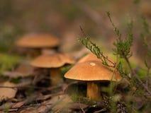 Kleiner bunter Pilz auf einem Baum und Gras Stockbild