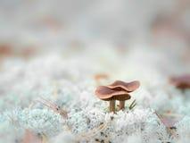 Kleiner bunter Pilz auf einem Baum und Gras Lizenzfreie Stockbilder