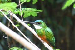 Kleiner bunter Vogel auf dem Baum Stockfotografie