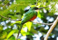 Kleiner bunter Vogel auf dem Baum Lizenzfreie Stockfotos