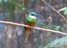 Kleiner bunter Vogel auf dem Baum Lizenzfreies Stockfoto
