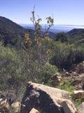 Kleiner Busch auf einem Felsen Lizenzfreie Stockbilder