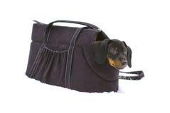 Kleiner Dachshund, der im Beutel für Hunde sitzt Lizenzfreie Stockfotos