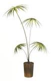 Kleiner dekorativer Baum Stockfotos