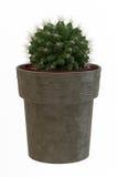 Kleiner dekorativer Baum Stockfotografie