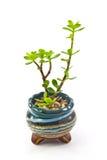 Kleiner dekorativer Baum lizenzfreie stockfotos