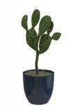 Kleiner dekorativer Baum getrennt auf einem weißen backgrou Lizenzfreies Stockfoto