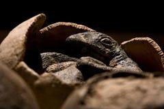 Kleiner Dino Lizenzfreie Stockfotografie