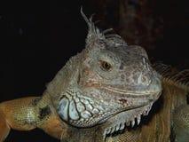 Kleiner Dino Stockbild