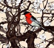 Kleiner eingebildeter roter Vogel in einer Kirschblüte Lizenzfreie Stockbilder