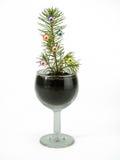 Kleiner eleganter Tannenbaum in einem Schnapsglas lizenzfreies stockbild