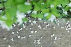 Kleiner Fall der weißen Blume auf Straße Lizenzfreies Stockfoto