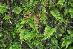 Kleiner Farn wachsen auf einem Baum Stockfotos