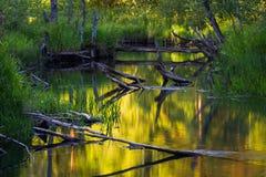 Kleiner Fluss Lizenzfreies Stockfoto