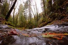 Kleiner Fluss, der durch einen Wald l?uft stockbild
