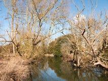 kleiner Fluss des laufenden Stromes durch bloße Baumniederlassungen des Landschaftsfrühlinges zur Seite Stockfotografie