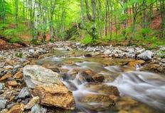 Kleiner Fluss im Berg Stockbilder