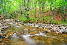Kleiner Fluss im Berg Lizenzfreie Stockbilder