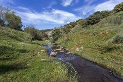 Kleiner Fluss im Frühjahr Stockfotos