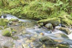 Kleiner Fluss im Wald lizenzfreie stockbilder