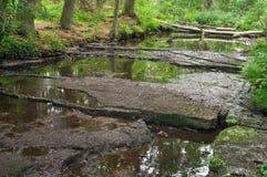 Kleiner Fluss im Wald Stockfoto