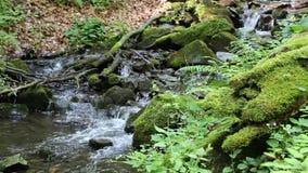 Kleiner Fluss im Wald stock video