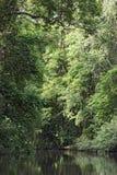 Kleiner Fluss mit dicht bewaldetem Ufer in Nationalpark Tortuguero, Costa Rica lizenzfreies stockfoto