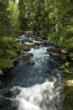 Kleiner Flusswasserfall, der durch starken Wald läuft Stockfotos