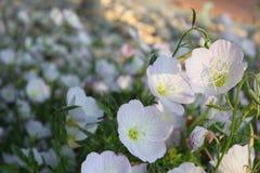 Kleiner Fokus der kleinen Blume Stockbild