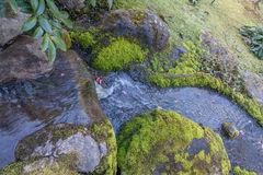 Kleiner frischer Wasserfall 3 Stockfoto