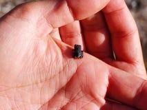 Kleiner Frosch Stockfoto