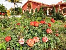 Kleiner Garten Stockfotografie