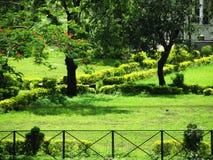 Kleiner Garten Stockfoto