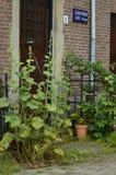 Kleiner Garten nah an Haus mit Blumen lizenzfreies stockfoto