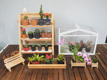 kleiner Gartenkaktus auf Tabelle Lizenzfreie Stockfotografie