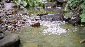 Kleiner Gebirgsstrom in den Waldgrün-Haselnussdickichten auf den Banken stock video