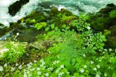 Kleiner Gebirgswasserfall auf den Felsen bedeckt mit dem Moos tief im Waldberuhigenden Naturhintergrund Weicher Fokus Stockfotografie