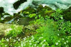 Kleiner Gebirgswasserfall auf den Felsen bedeckt mit dem Moos tief im Waldberuhigenden Naturhintergrund Weicher Fokus Lizenzfreies Stockbild